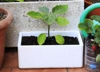 Huertos Ecológicos Low-Cost. Usar el EPS para plantar tus Verduras y Hortalizas